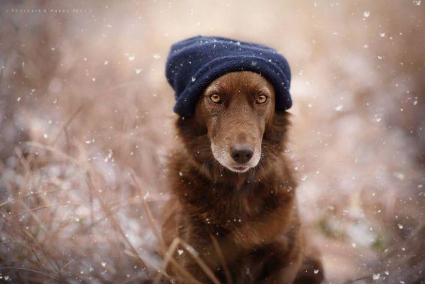 cachorros-e-natureza-22