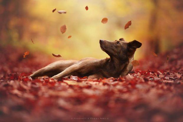 cachorros-e-natureza-24