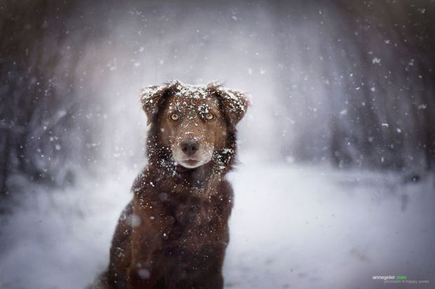 cachorros-e-natureza-27