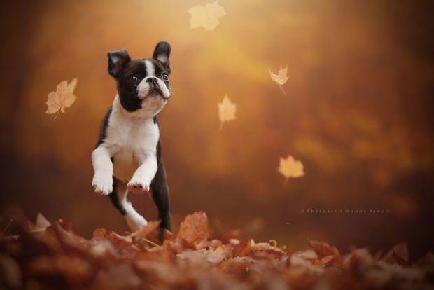 cachorros-e-natureza-4