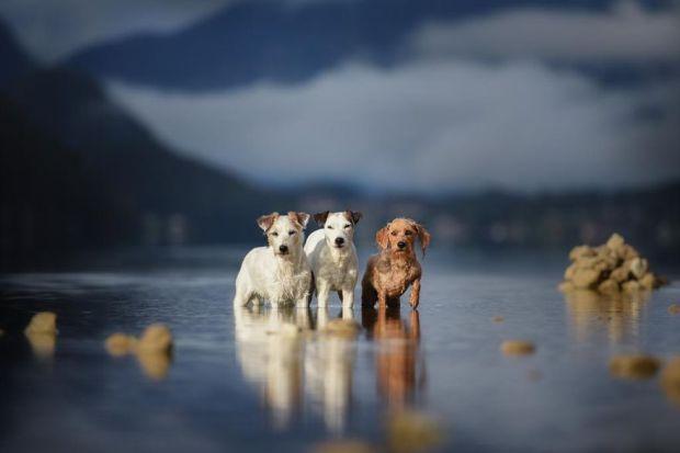 cachorros-e-natureza-9