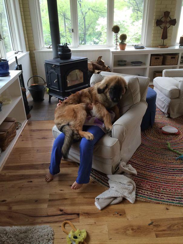 cachorros-espaçosos-15