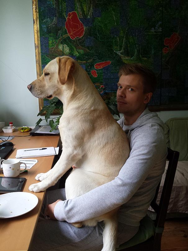 cachorros-espaçosos-8