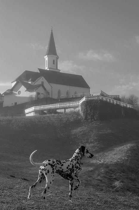 Dálmata igreja