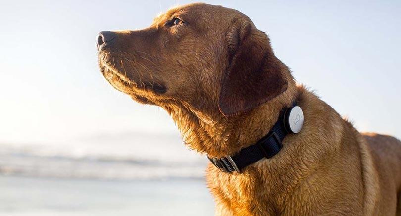 Gps para cachorro