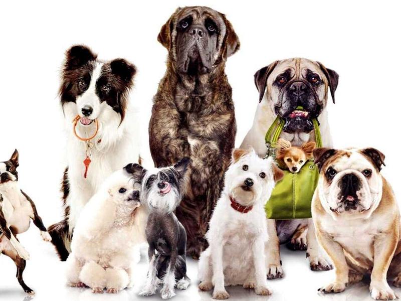 Grupos Caninos