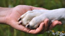 Ongs que ajudam cachorros de rua