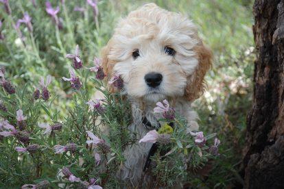 Cachorro filhote jardim