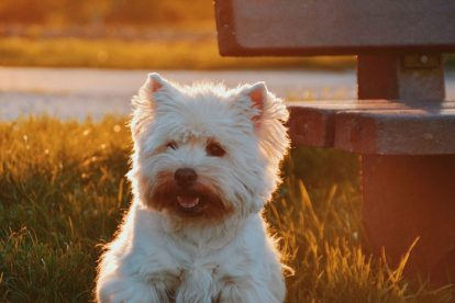 Cachorro fofo branco