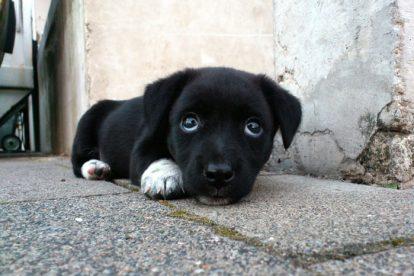 Filhote cachorro