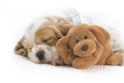 Filhote de cachorro dormindo