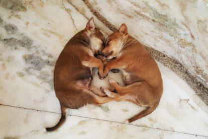 Filhotes de cachorro dormindo