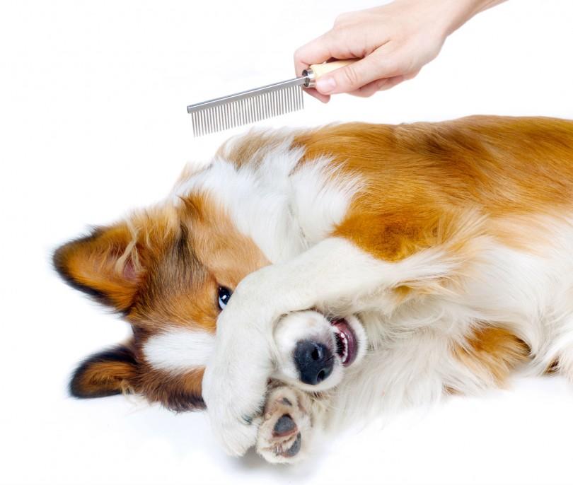 Como escovar os pelos dos cães