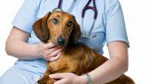 Hospitais públicos ou de baixo custo para pets
