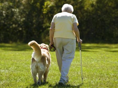 Cachorros para pessoas idosas
