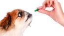 Vitaminas para cachorro