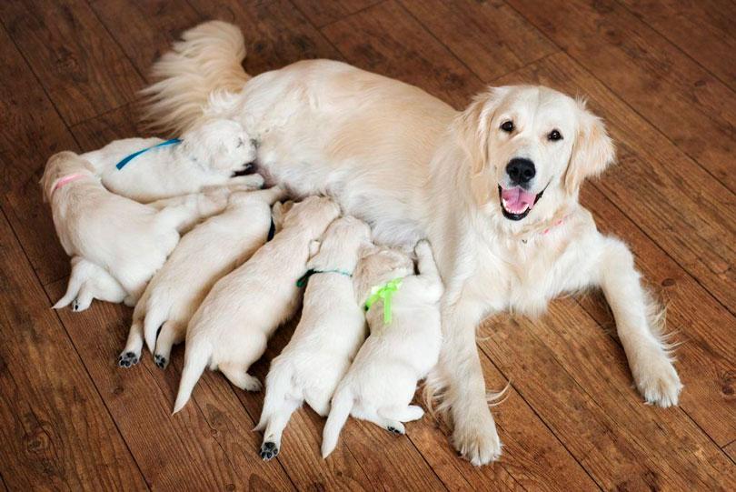 Quando separar o filhote da mãe - MelhorAmigo.Dog