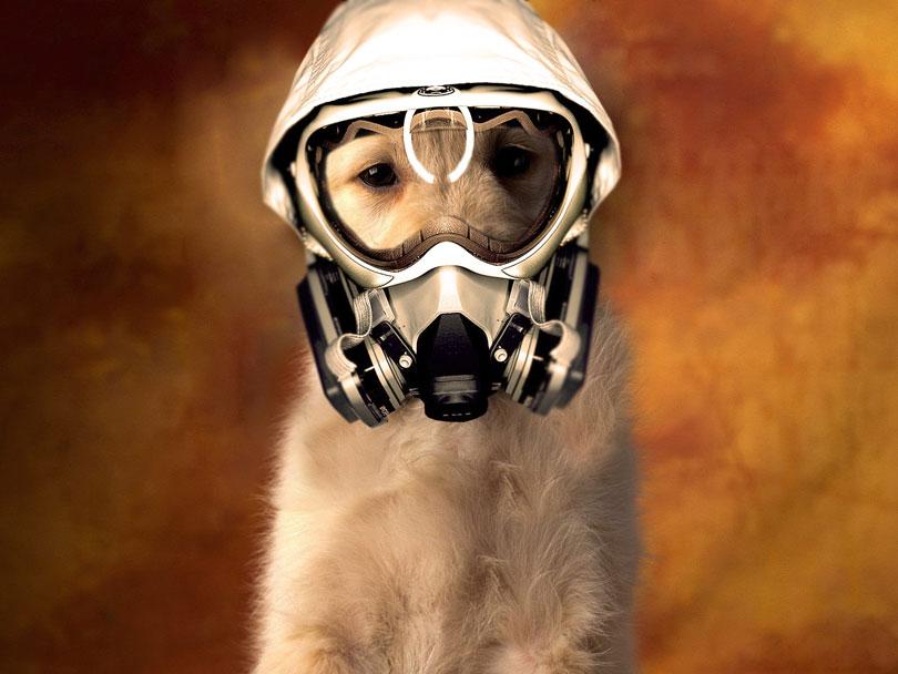 Inalação de fumaça por cães