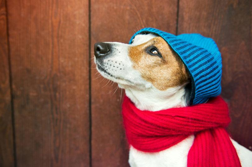 Roupa de frio para cachorro