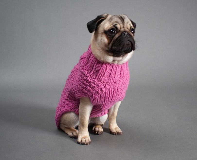 Roupa de frio para cachorros