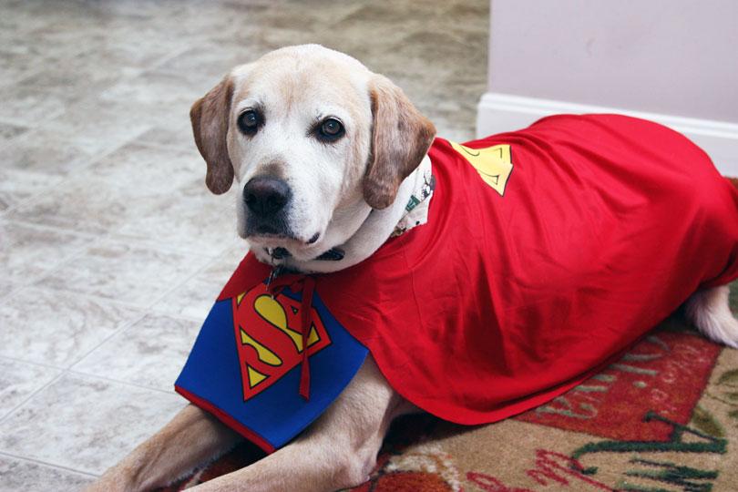 Super cachorro