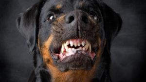 Cachorro agressivo