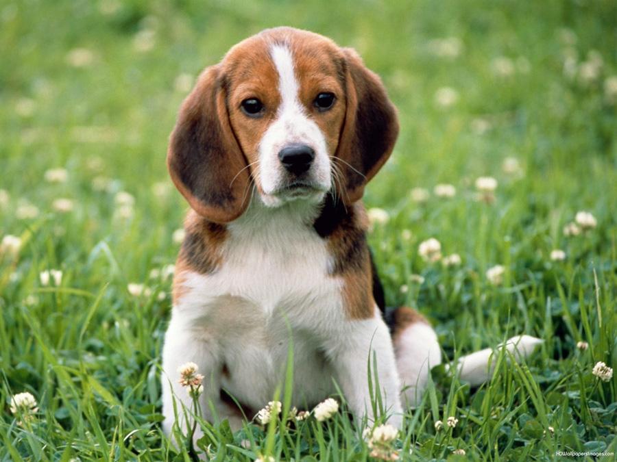 Cachorro teimoso